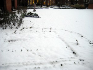 Snowfall in MERL's Garden