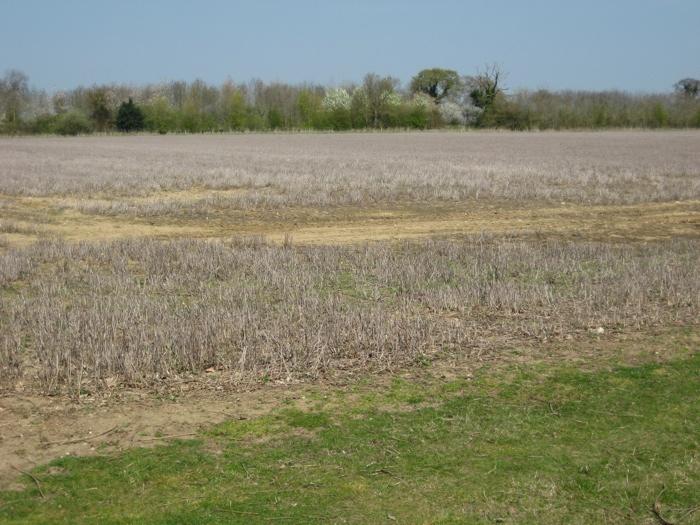 Field A