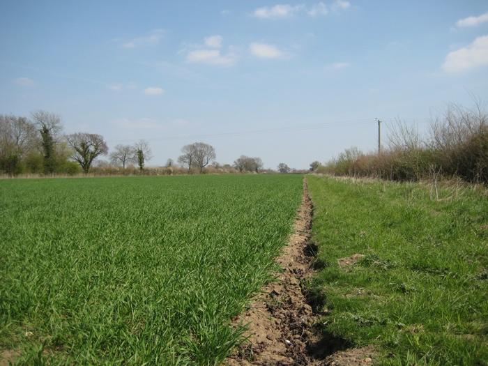 Field C