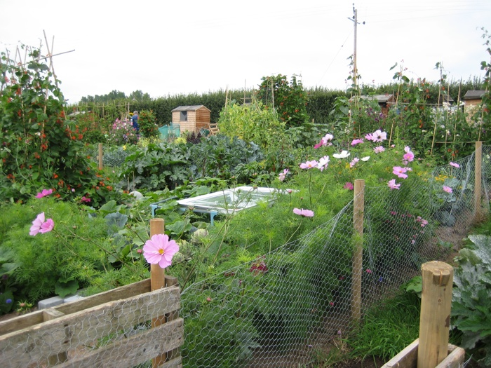 New Allotment Site