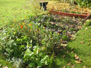 Allotment Plot Autumn