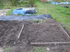 Allotment Plot Overwinter 1
