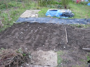 Allotment Plot Overwinter 2